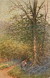 woman picking bluebells at base of silver birch