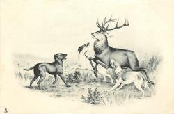 stag at bay, three stag-hounds