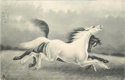 two horses, black behind and white front, black nuzzles white at neck, both race right