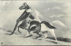 two horses, black left and white right, white nuzzles black at neck, both face left