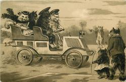 four cats driving right in open car, others observe