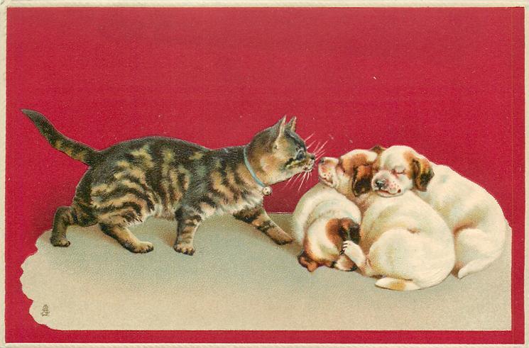 cat walks right toward three sleeping puppies