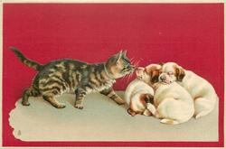 cat walks right toward three sleeping puppies
