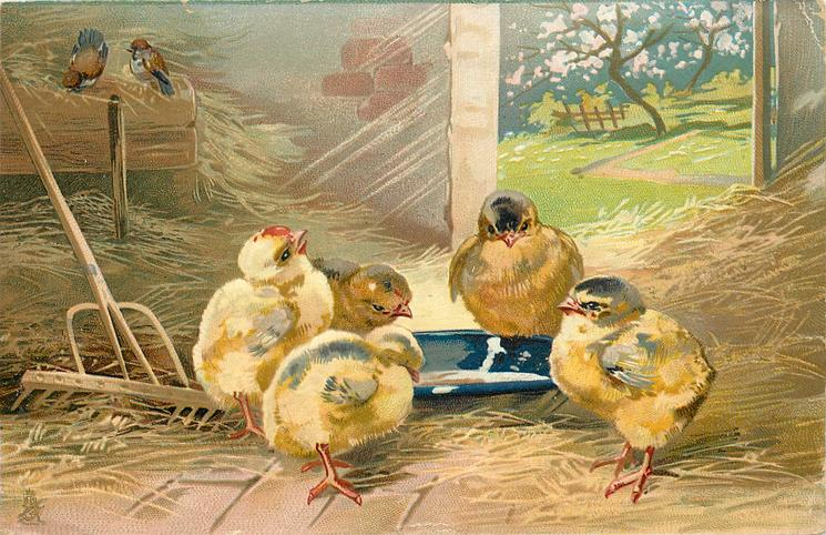 five yellow chicks gather around water dish, two small birds top left