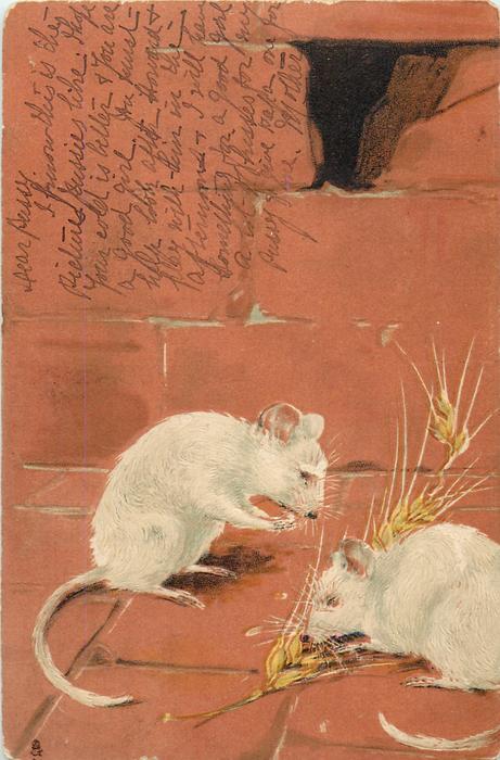 two mice eating ear of barley