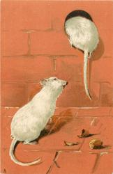two mice, one on floor, the other climbing into hole, hazelnuts on floor