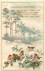 CHRISTMAS GREETINGS  6 robins, snow scene