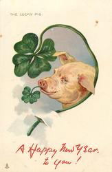 pig looks left