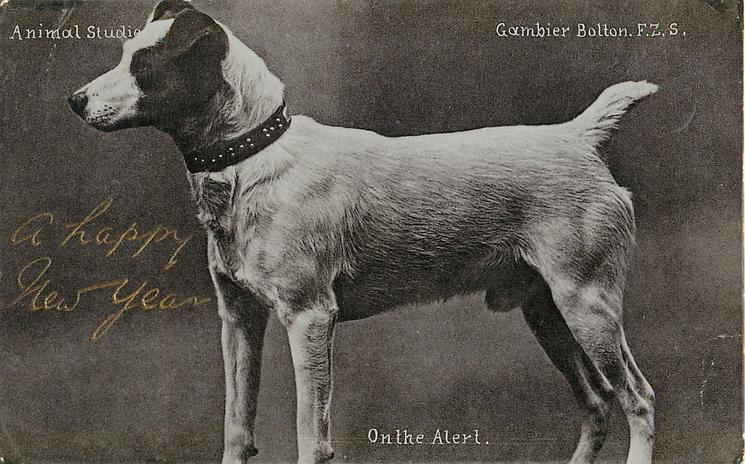 ON THE ALERT  terrier