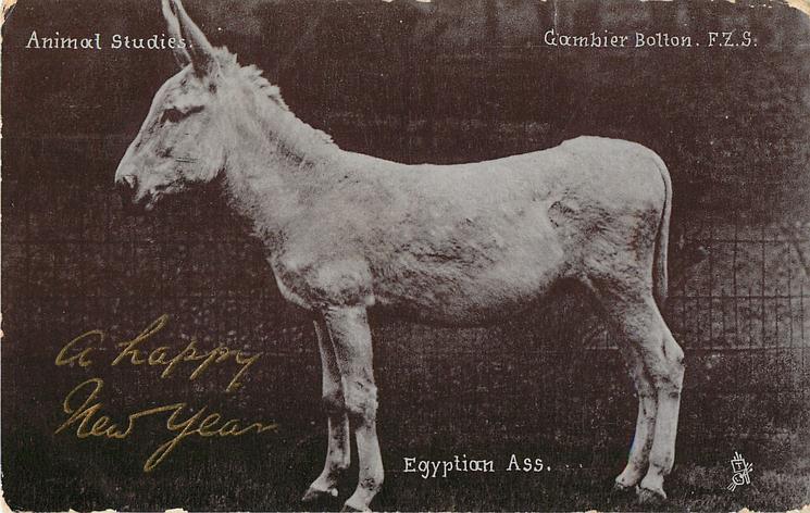 EGYPTIAN ASS