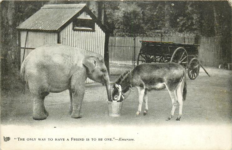 """THE ONLY WAY TO HAVE A FRIEND IS TO BE ONE.""  elephant & mule"