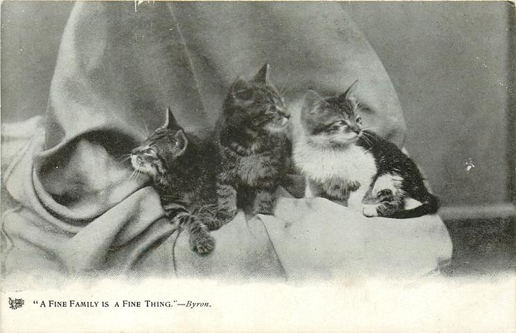 """""""A FINE FAMILY IS A FINE THING.""""  three kittens"""