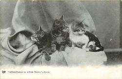 """A FINE FAMILY IS A FINE THING.""  three kittens"