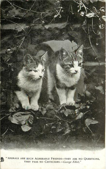 """ANIMALS ARE SUCH AGREEABLE FRIENDS-THEY ASK NO QUESTIONS, THEY PASS NO CRITICISMS.""  two kittens"