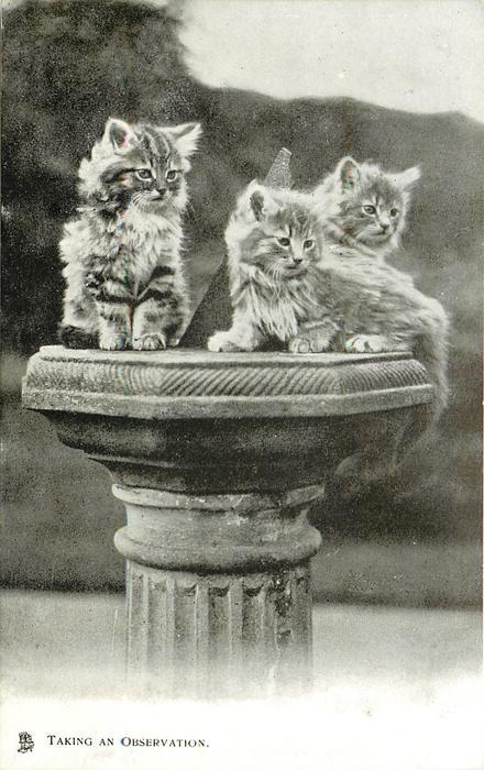 TAKING AN OBSERVATION  three kittens on sundial