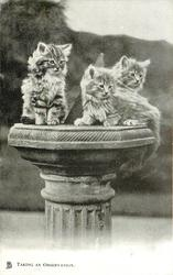 TAKING AN OBSERVATION  three kittens on sundial