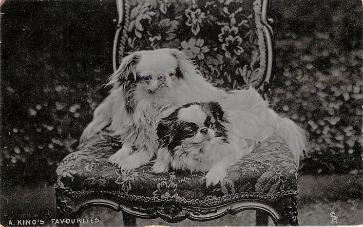 A KING'S FAVOURITIES  two pekingese lie on chair