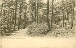 A PINE WALK, BOURNEMOUTH
