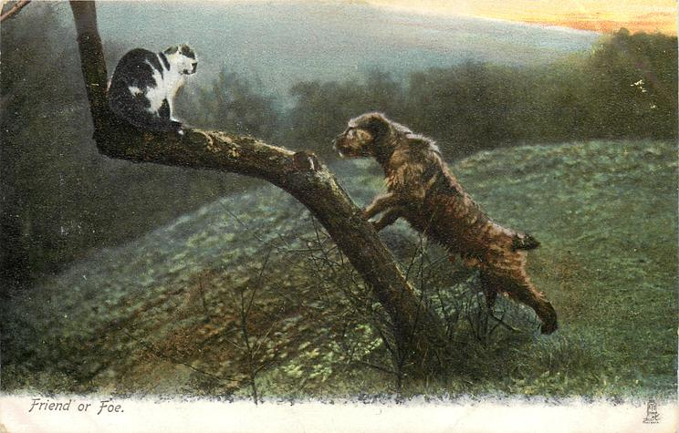 FRIEND OR FOE  terrier trees cat