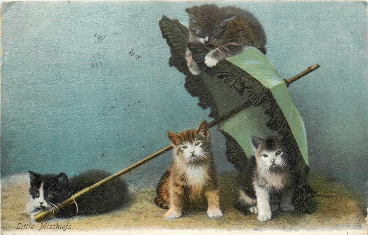 LITTLE MISCHIEFS  kittens