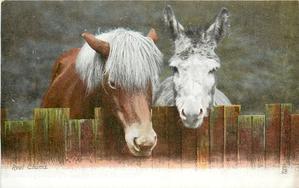 REAL CHUMS  pony & donkey