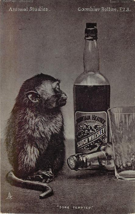 """SORE TEMPTED""  monkey & whisky bottle"