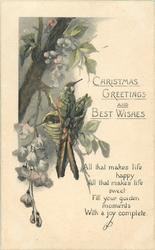 CHRISTMAS GREETINGS AND BEST WISHES  humming -birds on nest, blossom