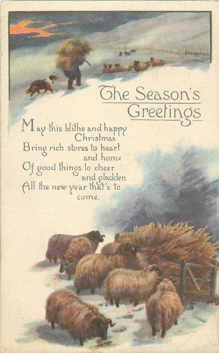 THE SEASON'S GREETINGS  sheep