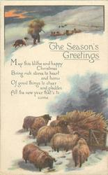 THE SEASON'S GREETINGS  sheep