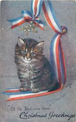 CHRISTMAS GREETINGS  kitten under mistletoe, ribbon