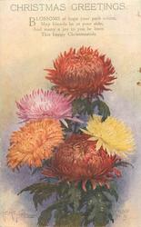 CHRISTMAS GREETINGS  5 different coloured chrysanthemums