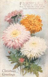 CHRISTMAS GREETINGS  chrysanthemums & buds