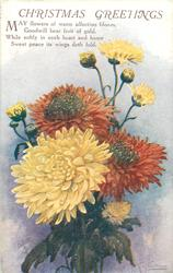 CHRISTMAS GREETINGS  many chrysanthemums