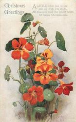 CHRISTMAS GREETINGS  nasturtiums