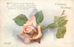 CHRISTMAS GREETINGS  pink rose