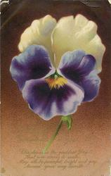 A HAPPY CHRISTMAS TO YOU  pansy