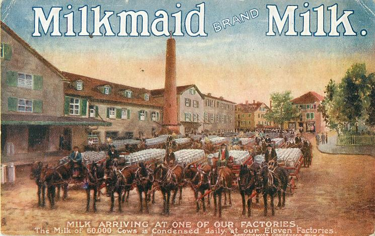 MILKMAID BRAND MILK, MILK ARRIVING AT ONE OF OUR FACTORIES.  horse drawn milk carts