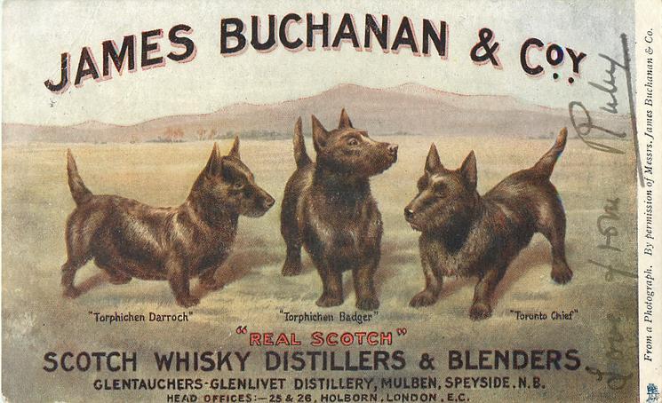JAMES BUCHANAN & COY, SCOTCH WHISKY DISTILLERS & BLENDERS  3 scotch terriers