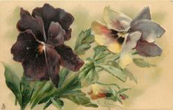 two open pansies & one bud, left pansy purple, stalks left
