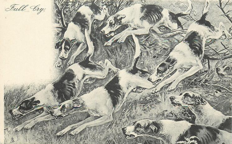 FULL CRY  foxhounds