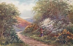 DEVONSHIRE LANE NEAR TAVISTOCK  woman in red hat picks blossoms to right of path