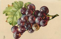 purple grapes, one bunch