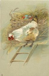 hen at top of ladder,  nest with coloured eggs behind her