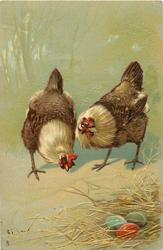 two hens stand behind nest with three coloured eggs