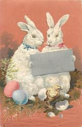 two rabbits hold silver slate, chick & eggs  below