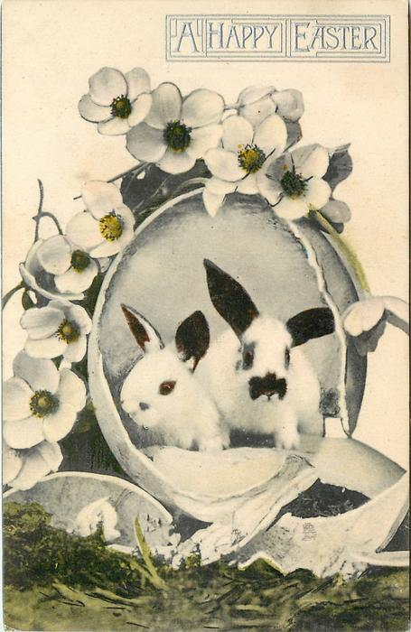 two white spotted bunnies in an egg broken open with white wild roses over top