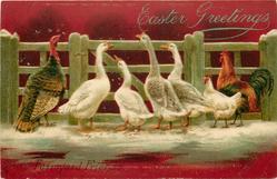 FARMYARD FRIENDS  poultry