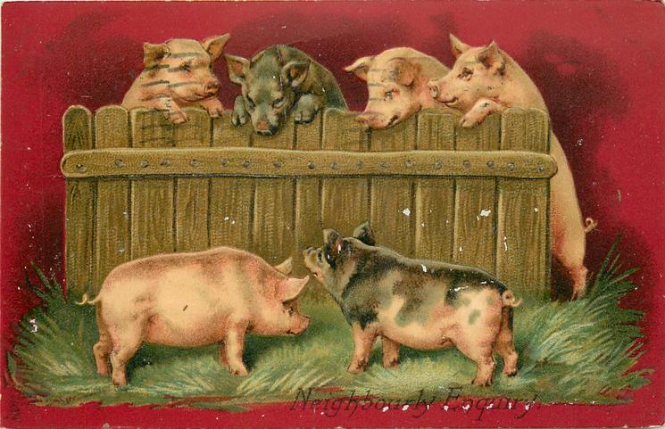 NEIGHBOURLY ENQUIRY  pigs