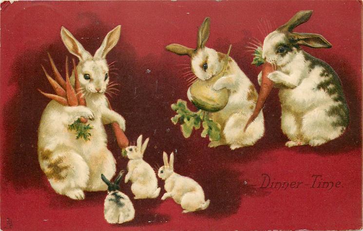 DINNER - TIME  rabbits