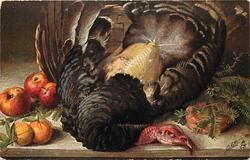 TURKEY  partially plucked bird lying front/back